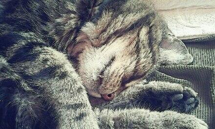 Sleepy Boo Radley